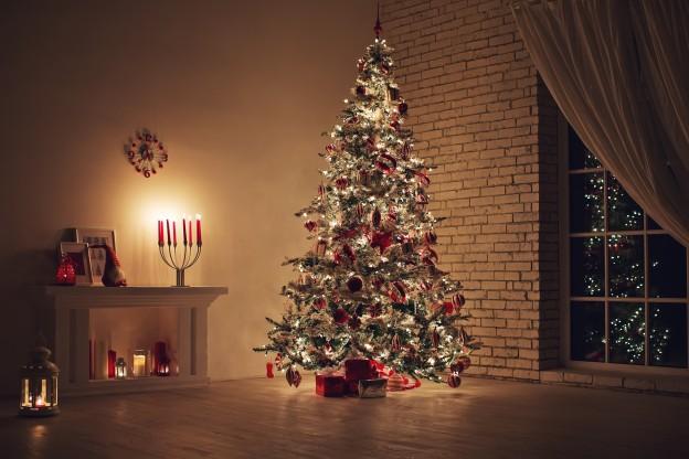 Christmas trees in Shropshire