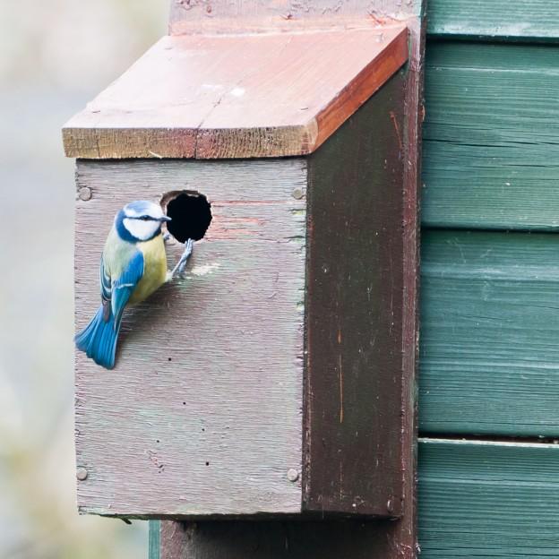 National Nest Box Week