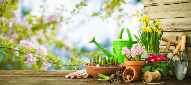 gardening tips 2020