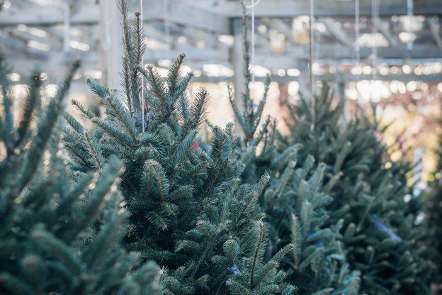 christmas tree - Weston Sawmill